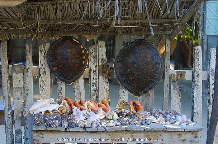 Illegal trade in sea-shells and turtle shells Morondava, Madagascar, Africa  -  Inaki Relanzon/ npl