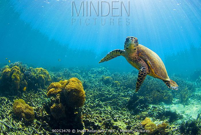 Sea Turtle (Chelonia mydas) in shallow water Nosy Be, north Madagascar, Africa  -  Inaki Relanzon/ npl