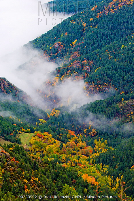 A high view of mist shrouding an autumnal valley Cadi Natural Park, Catalonia, Barcelona, Pyrenees, Spain, October 2005  -  Inaki Relanzon/ npl