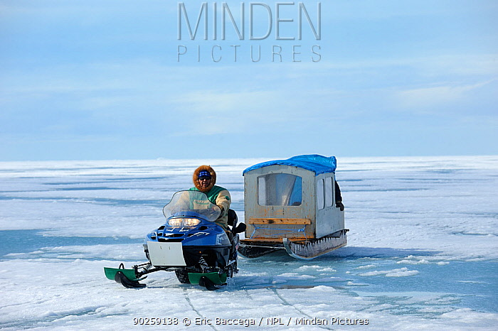 Inuit hunter driving snowmobile with a qamutik (Inuit sledge) on icepack Arctic Bay, Baffin Island, Nunavut, Canada, June 2011  -  Eric Baccega/ npl