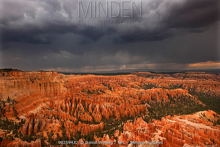 A thunderstorm drops heavy rain over the hoodoo sandstone formations Bryce Canyon National Park, Utah, USA, August  -  David Welling/ npl