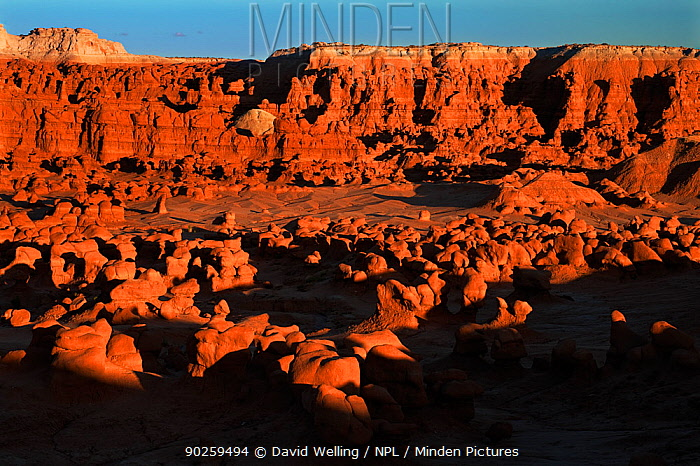 Hoodoo formations in the high desert of Goblin Valley State Park Utah, USA, August  -  David Welling/ npl