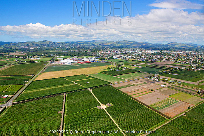 Aerial view of orchards next to the city of Hastings Hawkes Bay, New Zealand, November 2009  -  Brent Stephenson/ npl