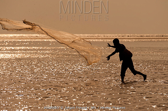 Silhouette of fisherman throwing his castnet in the mudflats at lowtide, East Timor, August 2010  -  Jurgen Freund/ npl