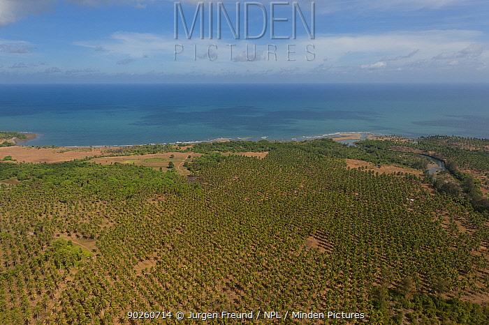 Aerial view of coconut plantation by the coast, Palawan, Philippines, April 2010  -  Jurgen Freund/ npl