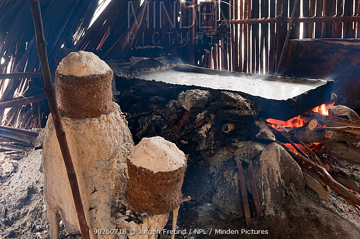 Traditional salt making, brine is boiled in a large open pan over fire of palm fronds for 8hrs, East Timor, August 2010  -  Jurgen Freund/ npl