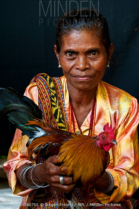 Portrait of East Timorese woman in traditional clothing with chicken, Maubara, East Timor, August 2010  -  Jurgen Freund/ npl