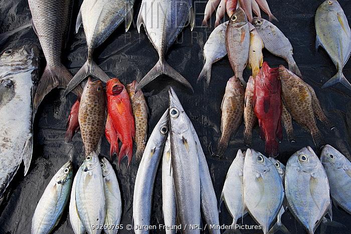 Various fresh fish for sale beside road, East Timor, August 2010  -  Jurgen Freund/ npl