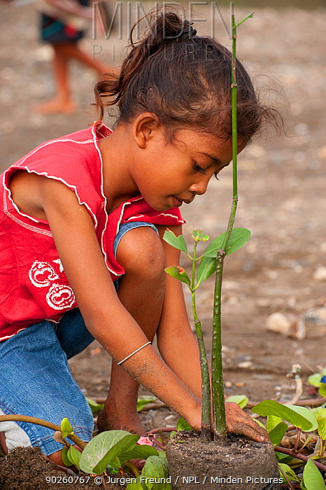 Child planting a mangrove shoot, Mangrove reforestation project in Dili, East Timor, August 2010  -  Jurgen Freund/ npl
