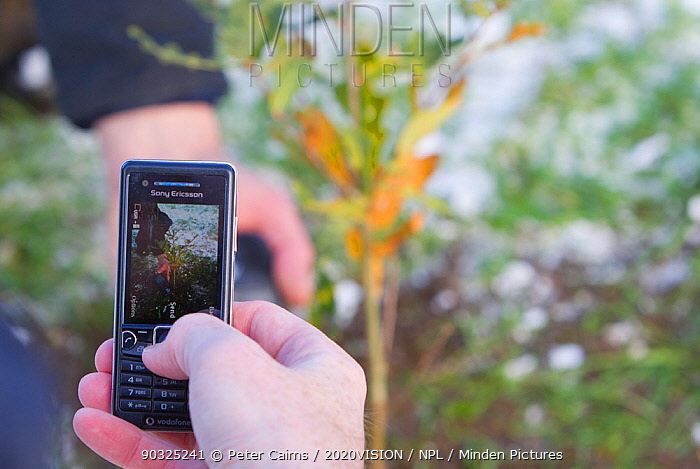 Volunteer photographing oak sapling on mobile phone, planting native woodland as part of The National Forest's planting day, Moira, Derbyshire, UK, November 2010  -  Peter Cairns/ 2020V/ npl