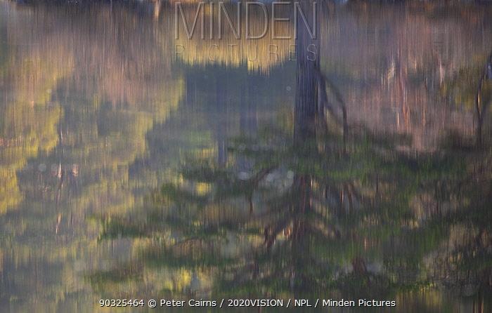 Native woodland reflected in Loch Vaa at dawn, spring, Cairngorms National Park, Highlands, Scotland, UK, April 2011  -  Peter Cairns/ 2020V/ npl