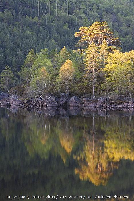 Dawn reflections in Loch Beinn a? Mheadhoin, Glen Affric, Wester Ross, Highlands, Scotland, UK, May 2011  -  Peter Cairns/ 2020V/ npl