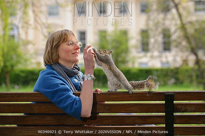 Woman sitting on bench, hand feeding Grey Squirrel (Sciurus carolinensis) in parkland, Regent's Park, London, UK, April 2011, Model released  -  Terry Whittaker/ 2020V/ npl