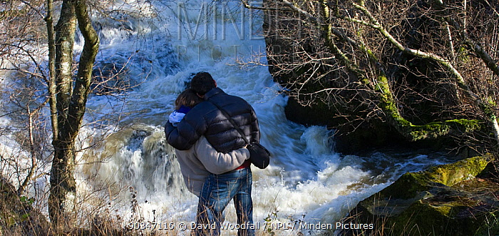 Rear view of couple watching leaping salmon River Marteg SSSI, Gilfach farm nature reserve, Radnorshire Wildlife Trust, November  -  David Woodfall/ npl