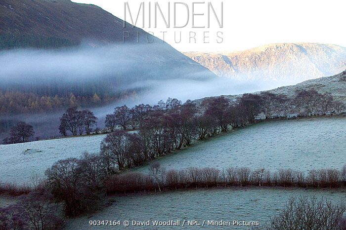 Gilfach Farm SSSI fields and hedges in frost and mist Marteg valley, Cambrian mountains, Radnorshire Wildlife Trust, Wales, UK, November 2010  -  David Woodfall/ npl