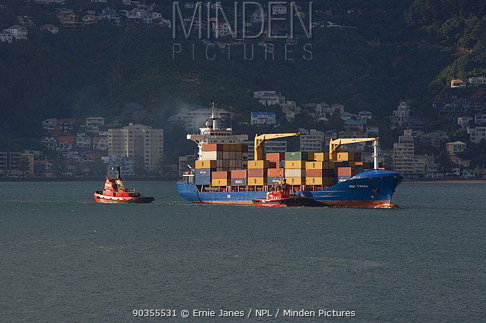 Tugs escorting Container ship into Wellington harbour, view from Mount Victoria, North Island, New Zealand, 2009  -  Ernie Janes/ npl