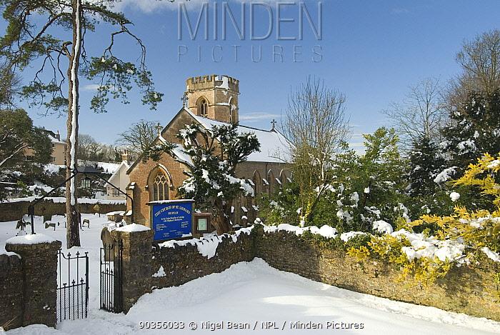Church of St Leonard, Shipham, after heavy snowfall, Somerset, February 2009  -  Nigel Bean/ npl