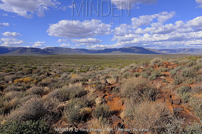 Semi-arid desert in the Tankwa Karoo National Park, Western Cape, South Africa, April 2011  -  Tony Phelps/ npl