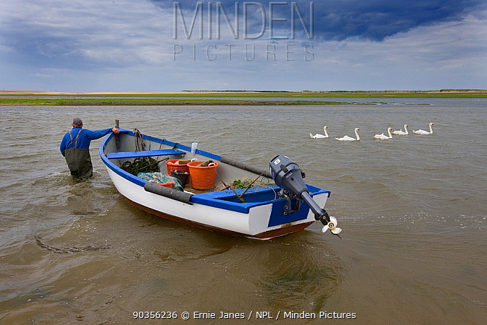 Fisherman wades out pulling boat into deep water at low tide, Blakeney Point, Norfolk, UK  -  Ernie Janes/ npl