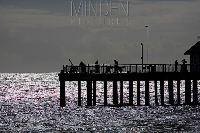 Silhouette of fishermen on pier, Southwold Pier, Suffolk, UK, March  -  Ernie Janes/ npl