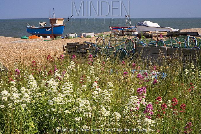 Fishing boats hauled up on beach at Aldeburgh, Suffolk, UK  -  Ernie Janes/ npl