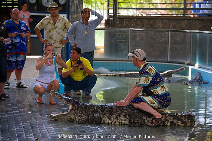Tourist photographed sitting on crocodile at Zoo, Thailand  -  Ernie Janes/ npl