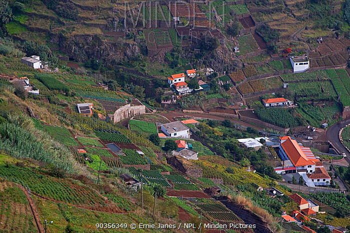 Aerial view of housing and cultivation on hillside terraces, Madeira, November  -  Ernie Janes/ npl