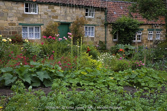 Vegetable garden behind cottage in North Yorkshire National Park, Yorkshire, UK  -  Ernie Janes/ npl