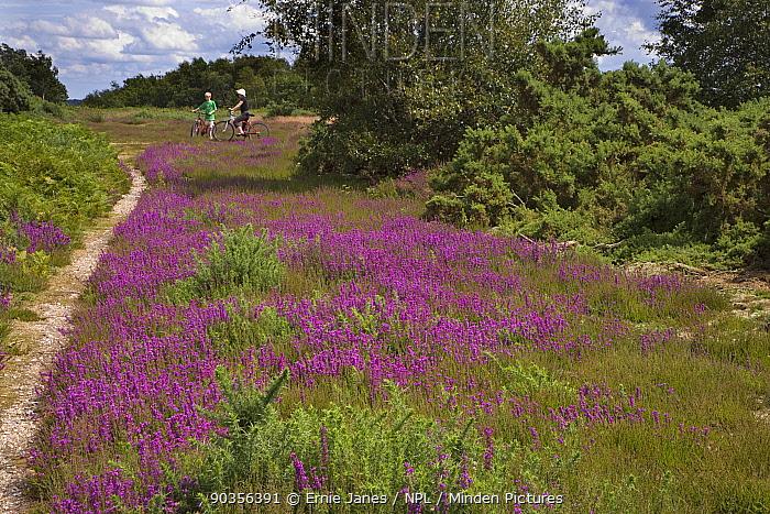Two cyclists on Kelling Heath, Norfolk, UK  -  Ernie Janes/ npl