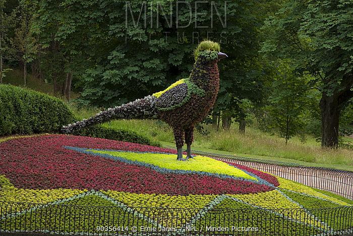Floral design in shape of pheasant, Waddesdon Manor, Buckinghamshire, UK  -  Ernie Janes/ npl