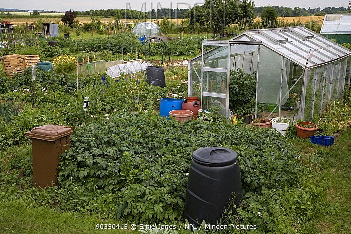 Greenhouse, compost bins and vegetable garden in Garden Allotments, Buckinghamshire, UK, June  -  Ernie Janes/ npl