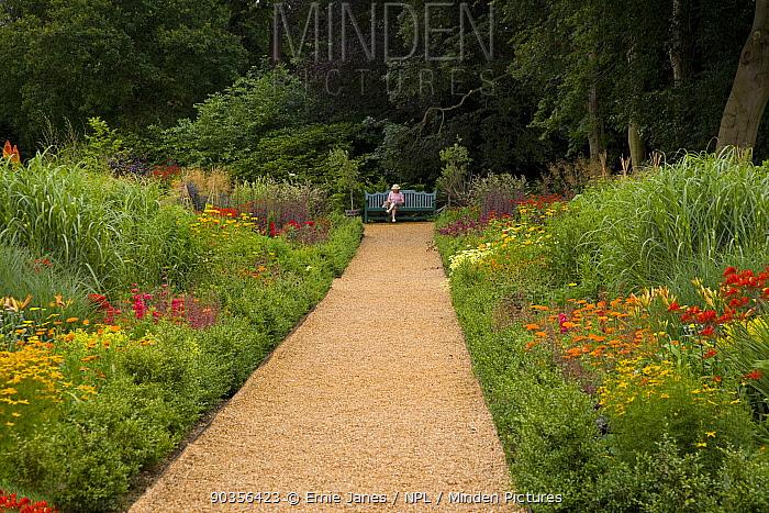 Woman sitting on garden bench at end of path between flower borders, Norfolk, UK  -  Ernie Janes/ npl