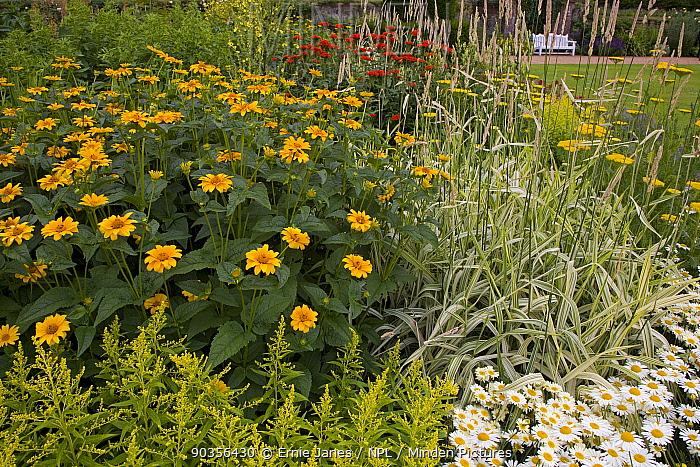 Flower garden, Norfolk, UK, July  -  Ernie Janes/ npl