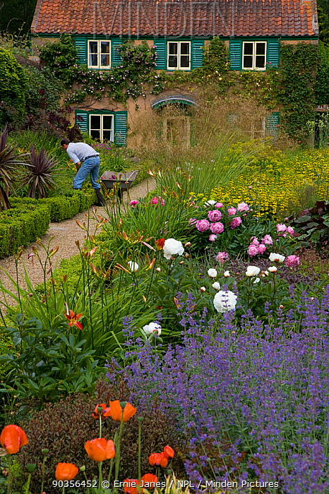 Gardener at work in the Spider Garden at Hoveton Hall, Norfolk, UK  -  Ernie Janes/ npl