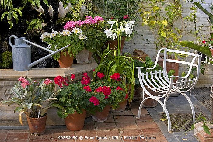 Flower still life in Greenhouse, Norfolk, UK  -  Ernie Janes/ npl