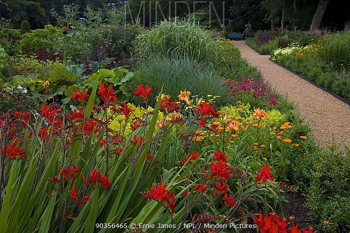 Flowers in garden border, Norfolk, UK  -  Ernie Janes/ npl