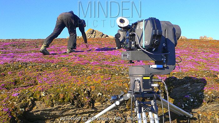 Cameraman Warwick Sloss filming Purple Saxifrage (Saxifraga oppositifolia) in flower on Svalbard, Spitzbergen, Norwiegan Arctic, July 2009 Taken on location for the BBC series, Frozen Planet  -  Jeff Wilson/ npl