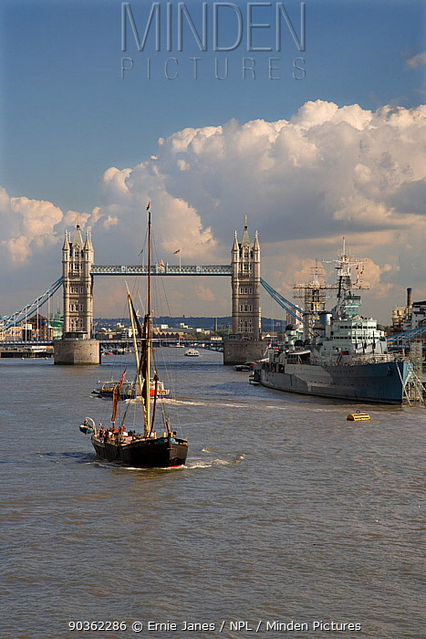 Thames barge on River Thames with Tower Bridge and HMS Belfast in the background, London, UK, September 2006  -  Ernie Janes/ npl