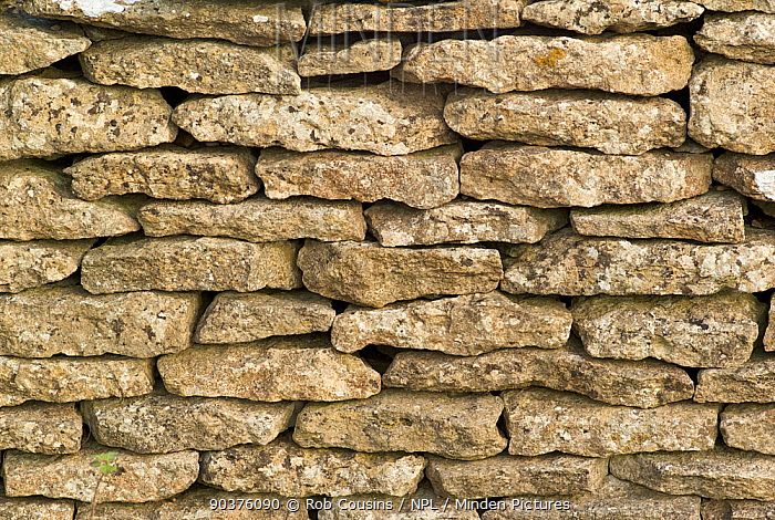Dry stone wall, Cotswolds, Gloucestershire, England  -  Rob Cousins/ npl
