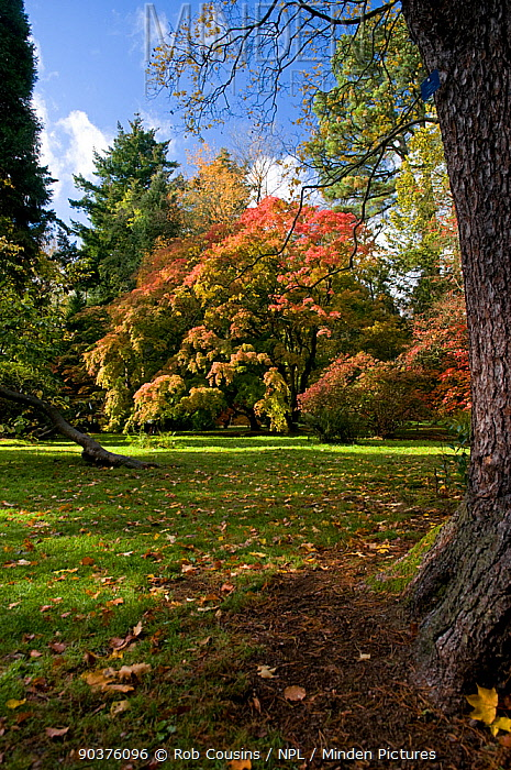 Trees showing first autumn colour, Old Arboretum, Westonbirt Arboretum, Gloucestershire, UK, October 2011  -  Rob Cousins/ npl