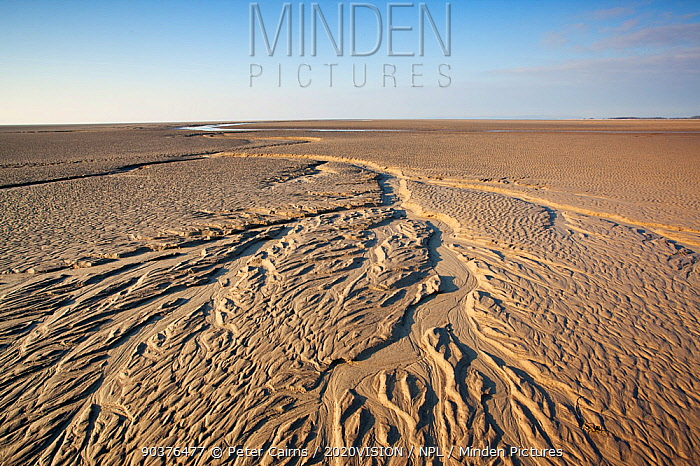 Patterns in mudflats, Morecambe Bay, Cumbria, England, UK, February  -  Peter Cairns/ 2020V/ npl