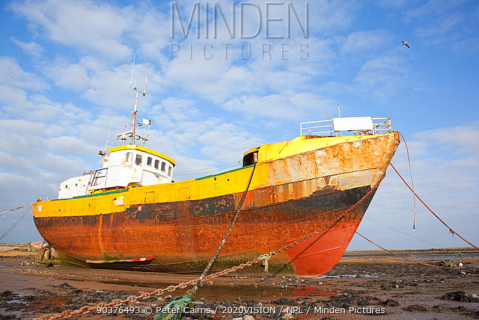 Old fishing boat held upright at low tide with ropes and chains, Roa Island, Morecambe Bay, Cumbria, England, UK, February 2012  -  Peter Cairns/ 2020V/ npl