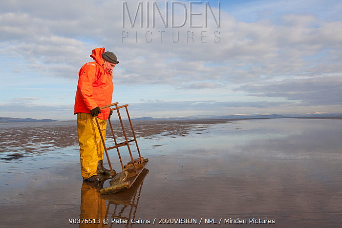 Cockle fisherman working in Morecambe Bay, Cumbria, England, UK, February Model released  -  Peter Cairns/ 2020V/ npl