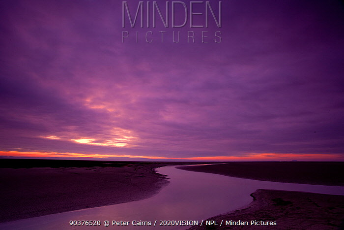 Estuarine river inlet running across mudflats at dawn, Morecambe Bay, Cumbria, England, UK, February  -  Peter Cairns/ 2020V/ npl