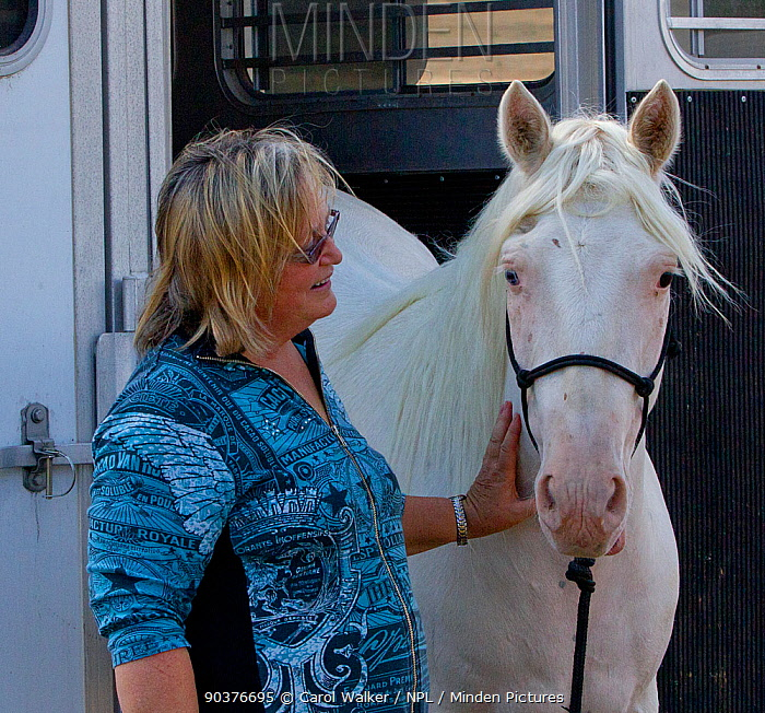 Carol Walker with her male cremello Wild horse, mustang colt Claro that had been rounded up from the McCullough Peak herd, Wyoming, and put up for adoption, Colorado, USA, August 2011, model released  -  Carol Walker/ npl