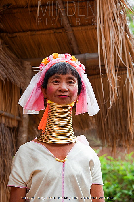 Long necked woman with many neck rings belonging to Padaung Tribe, Thailand  -  Ernie Janes/ npl