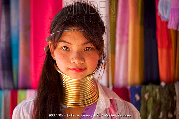 Long necked young woman with neck rings, belonging to Padaung Tribe, Thailand  -  Ernie Janes/ npl