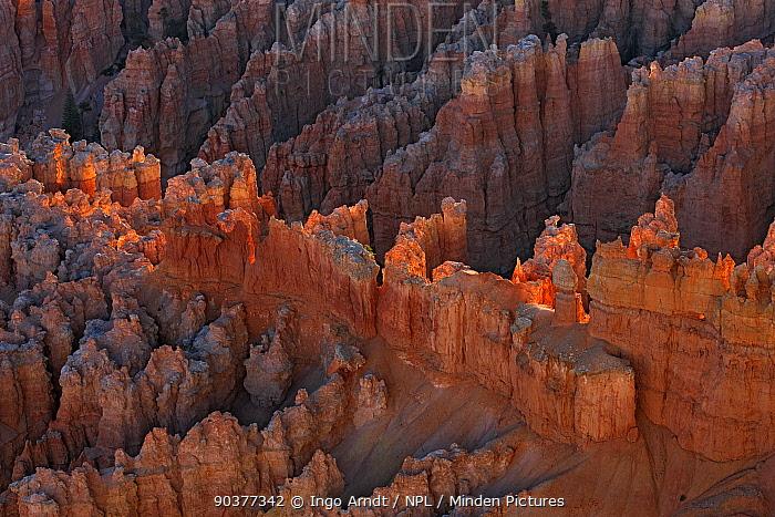 Amphitheater at Bryce Canyon, erosional formations called hoodoos, Bryce Canyon National Park, Utah, USA, September 2010  -  Ingo Arndt/ npl