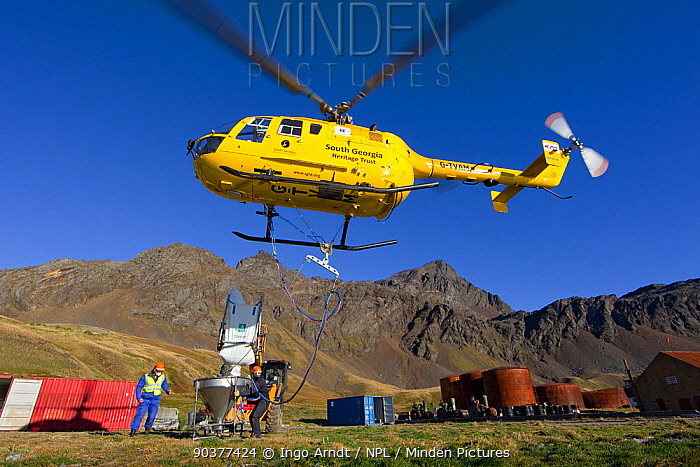 Bucket on helicopter is filled with bait, South Georgia Heritage Trust Rat Eradication Project, Grytviken, South Georgia, March 2011  -  Ingo Arndt/ npl