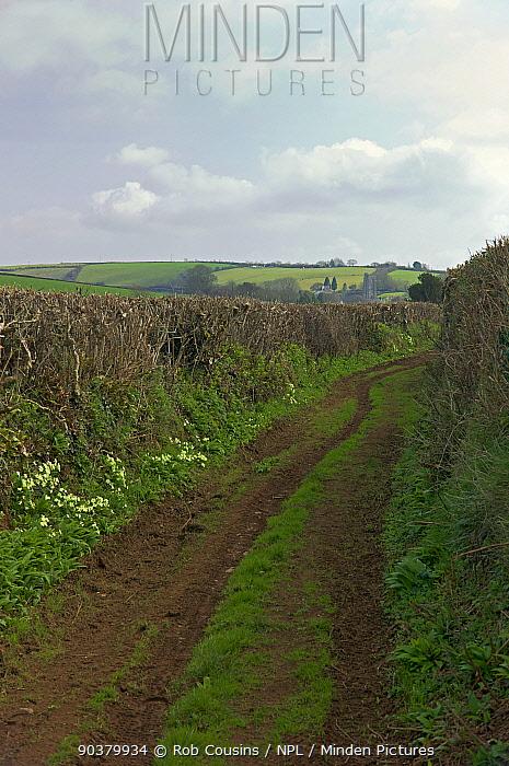 Green lane with Primroses (Primula vulgaris) in flower, near Cornworthy, Devon, UK, early spring, March 2012  -  Rob Cousins/ npl